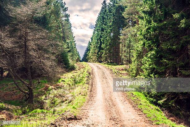 footpath through kielder forest - northeastern england stock photos and pictures