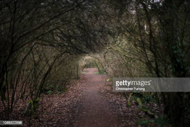 Footpath through Moseley Bog, believed to be the inspiration for Tolkien's ancient forests in his books The Lord of the Rings and The Hobbit on...