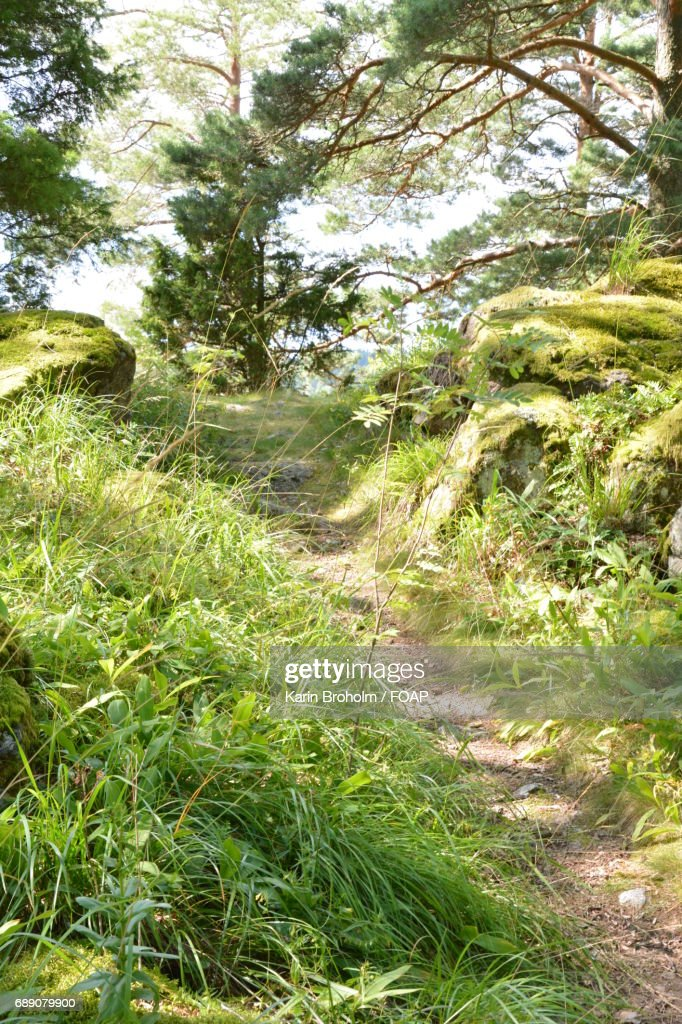Footpath through the pasture : Stock Photo