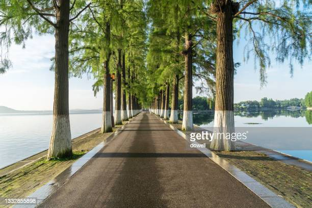 footpath through tree - hubei province stock pictures, royalty-free photos & images