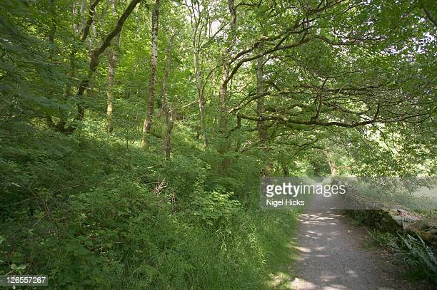 footpath through woodland en route to heddon's mouth cove, near lynton on the devon coast in exmoor national park - lynton stock pictures, royalty-free photos & images