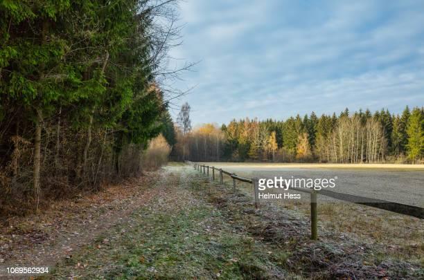 footpath with autumn colored trees - november stock-fotos und bilder