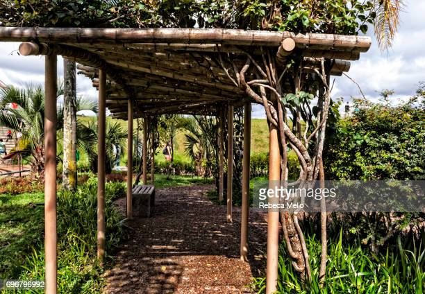 A footpath with pergola in the Botanical Garden