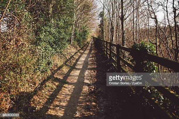 footpath with railing shadow amidst trees on field - bortes foto e immagini stock