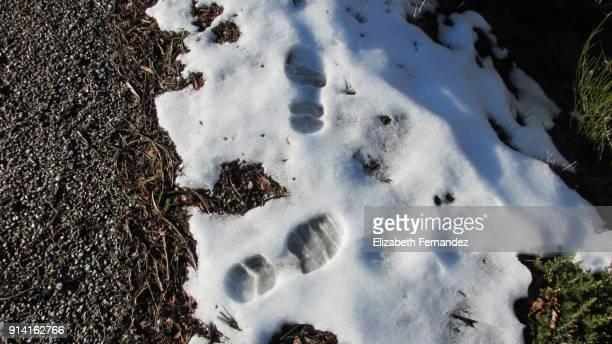 Footprint in melting snow