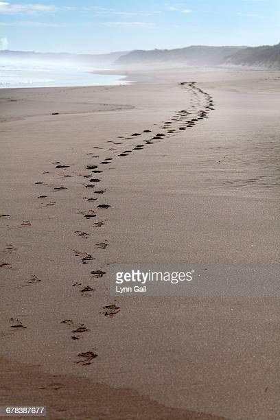 Footprints along at Cape Woolamai, Phillip Island, Victoria, Australia, Pacific