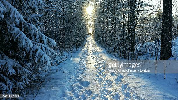 Footprints Amidst Trees In Forest During Winter