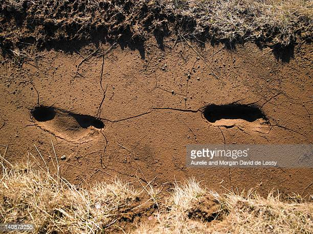 Footprints in cracked soil