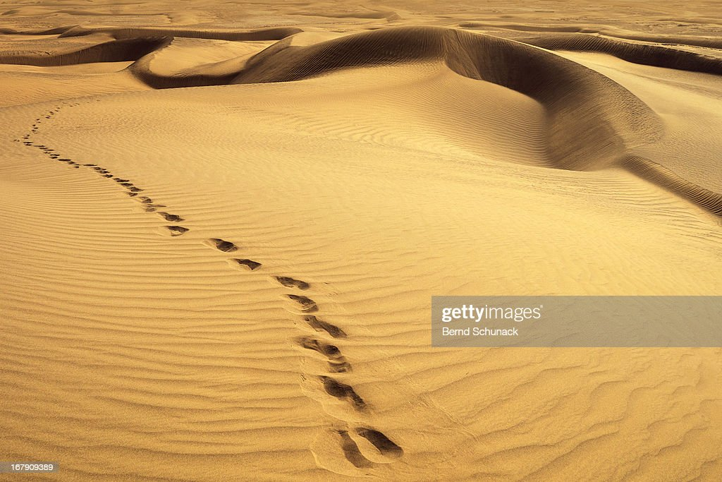 Footprints in desert : Stock-Foto