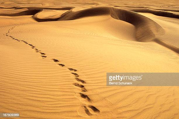 footprints in desert - bernd schunack stockfoto's en -beelden