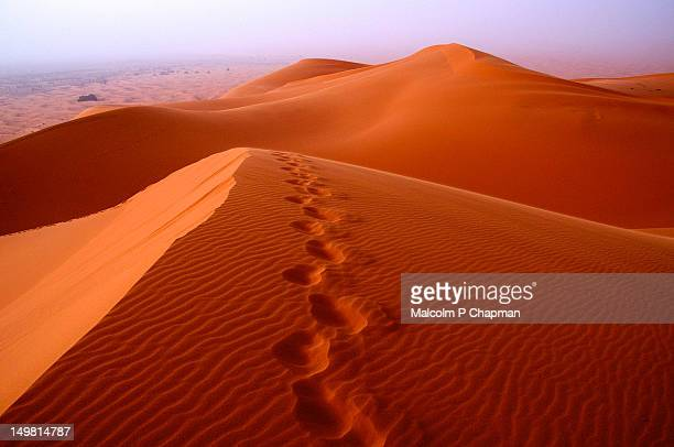 footprints in desert sand - merzouga stock pictures, royalty-free photos & images