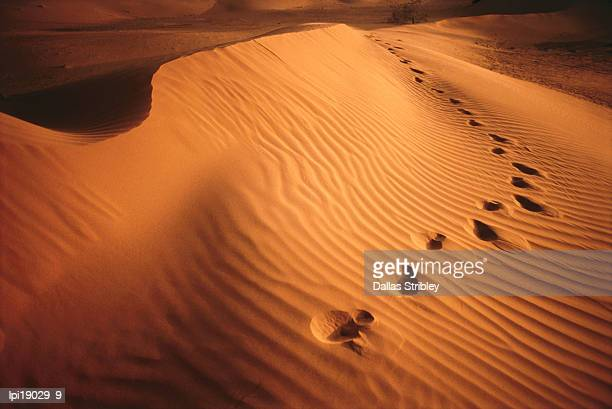footprints in rippled red sand of perry sand dunes, near mildura. - footprint stock pictures, royalty-free photos & images