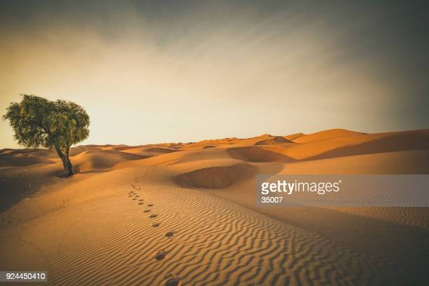 footprints in the desert - desert stock pictures, royalty-free photos & images
