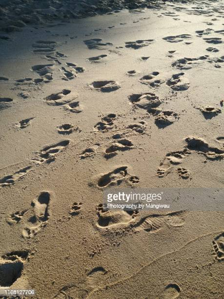 footprints in the sand - クランダ ストックフォトと画像