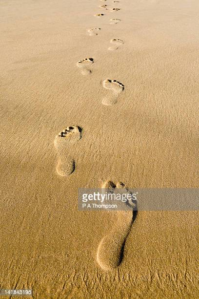 footprints in the sand - footprint stock pictures, royalty-free photos & images
