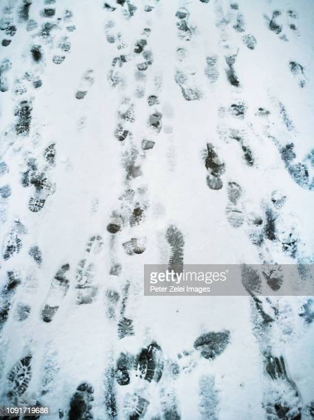 footprints in the snow - peter snow stock pictures, royalty-free photos & images