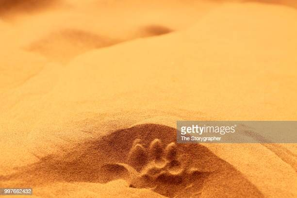 footprints in the thar - the storygrapher - fotografias e filmes do acervo