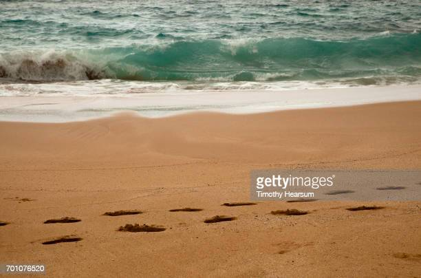footprints on a sandy beach; tide line and waves beyond - timothy hearsum stock photos and pictures