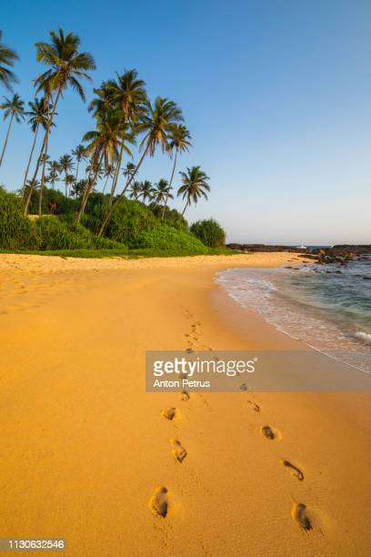 Footprints on a sandy beach with coconut palms. Sri Lanka