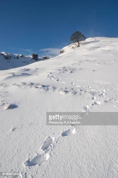Footprints on a steep, snowy hillside, Peak District, Derbyshire, England