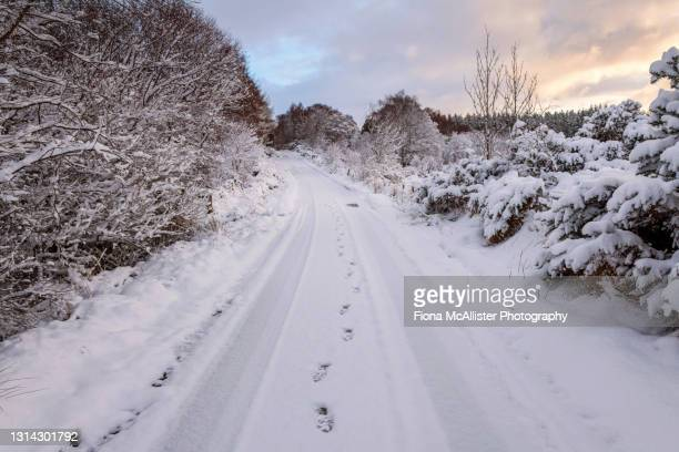 footprints on snow covered road in the scottish highlands - drumnadrochit stock pictures, royalty-free photos & images