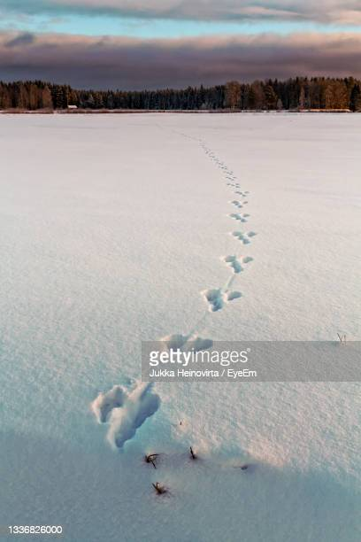 footprints on the snow - heinovirta stock pictures, royalty-free photos & images