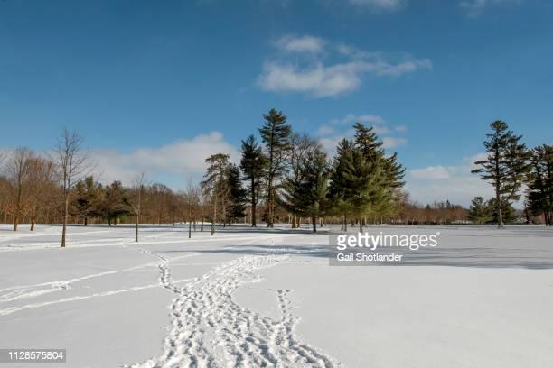 Footprints to Winter Wonderland
