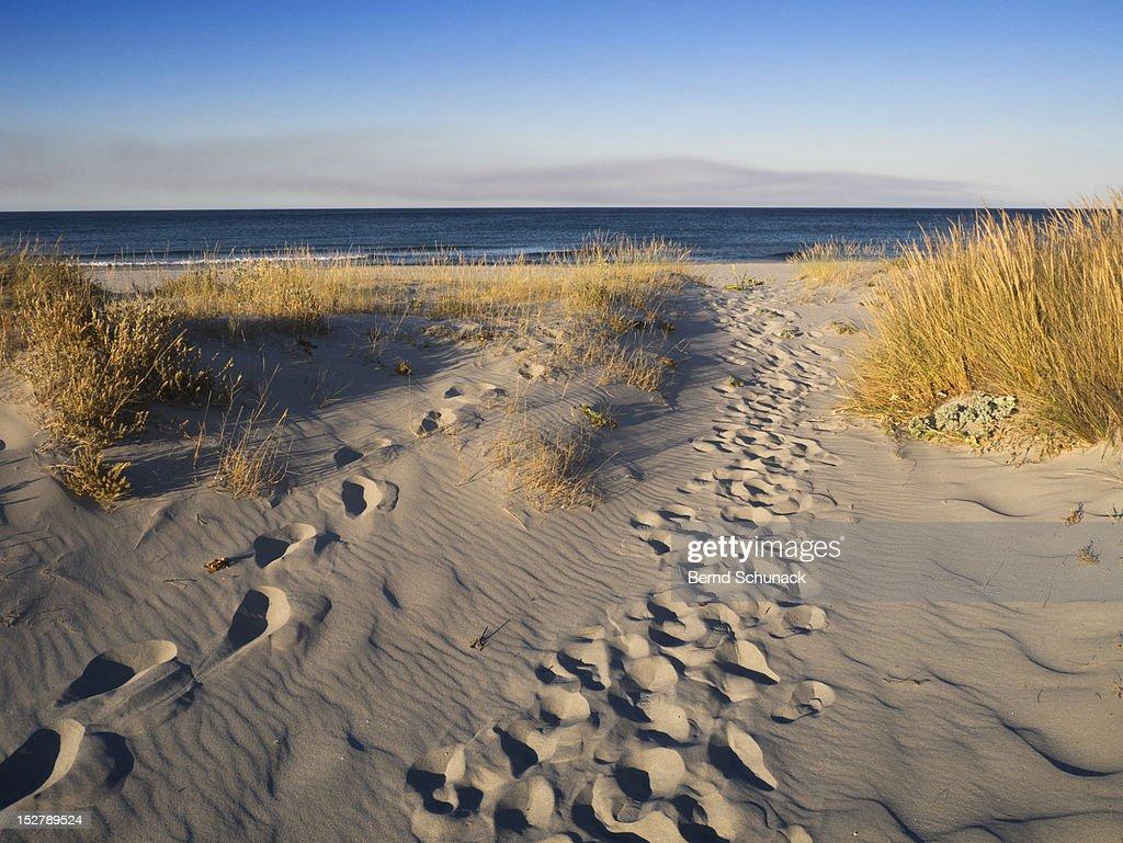 Footsteps in dunes : Stock-Foto