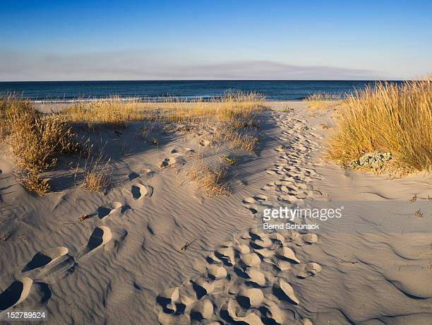 footsteps in dunes - bernd schunack stock photos and pictures