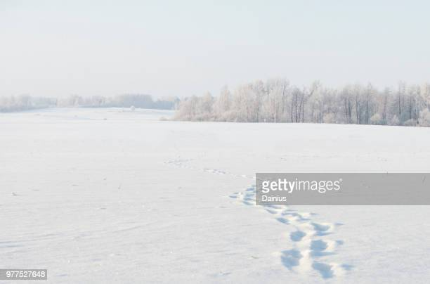 footsteps in snow - 人の足跡 ストックフォトと画像
