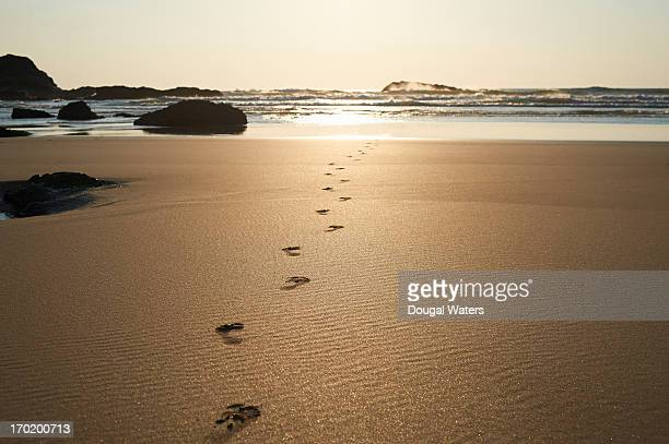 Footsteps leading towards sea at beach.