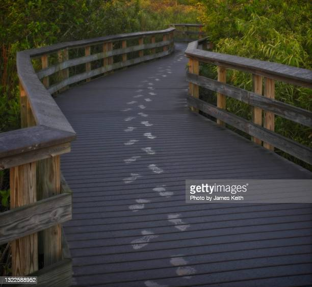 footsteps - anhinga_trail stock pictures, royalty-free photos & images