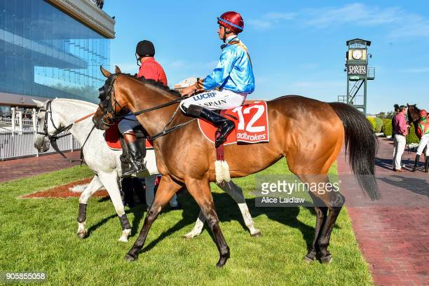 For a Song ridden by Zac Spain returns to scale after winning the Ladbrokes Multimaker at Caulfield Racecourse on January 17 2018 in Caulfield...