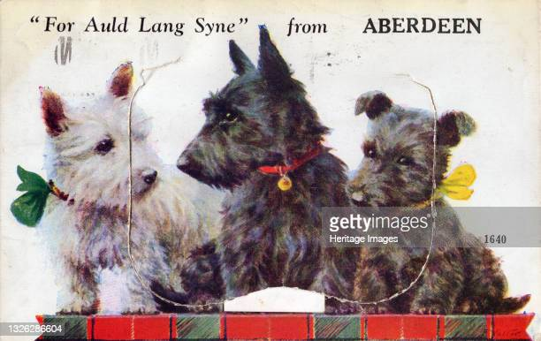For Auld Lang Syne from Aberdeen, 1933. Scottish terriers. Artist Unknown.
