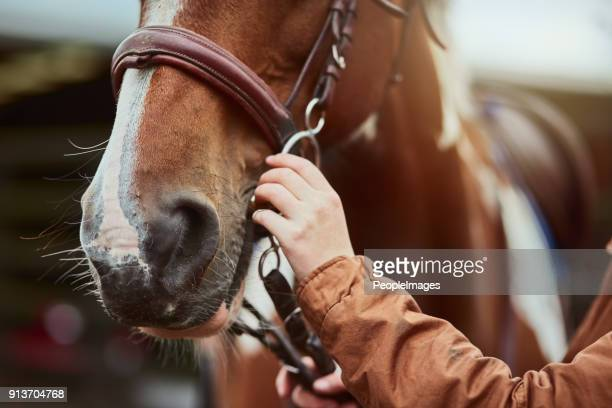 for her safety as well as her pony's - tame stock photos and pictures
