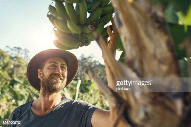 for me, agriculture is my destiny - banana tree stock pictures, royalty-free photos & images