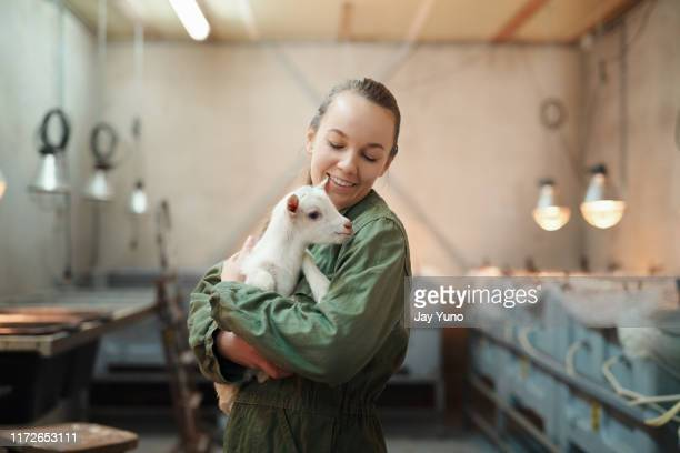 for the love of goats - farm stock pictures, royalty-free photos & images