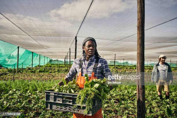 for the love of organic farming - mixed farming stock pictures, royalty-free photos & images