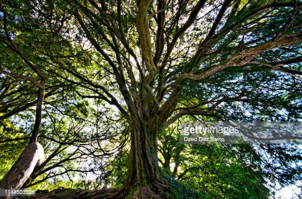 force of nature - prosperity stockfoto's en -beelden