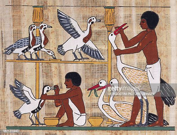 Forcefeeding geese papyrus reconstruction of a relief from the mastaba of Ptahhotep at Saqqara originally dating from the Dynasty V Egyptian...