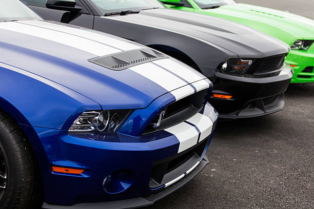 Ford and Shelby Mustangs