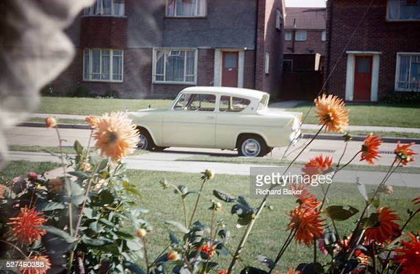A Ford Anglia is parked in an empty road and homegrown beds of dahlias grow in the front garden of a council house in the early 1960s Looking through...