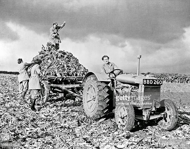 Fordson tractor with members of the British Women's Land Army doing farm labour during World War II