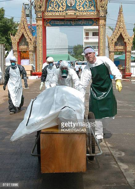 Foreign volunteers carry a body bag on a cart to a refrigirated container van at the Yan Yaw Buddhist temple in Takua Pa, Phang Nga province to...