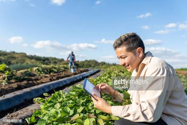 日本の外国人労働者。フィールドでサツマイモの葉をチェックするデジタルタブレットを持つ若者。スマート農業。 - スマート農業 ストックフォトと画像