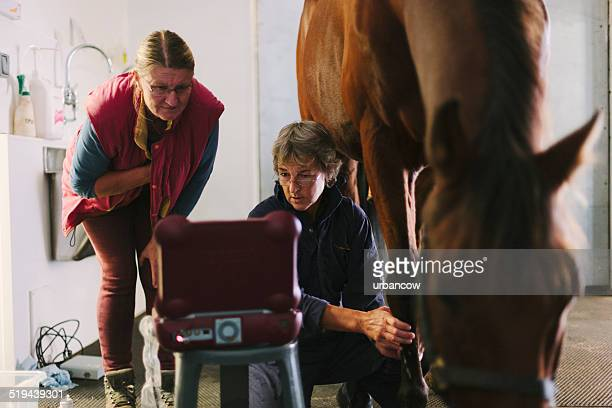 foreleg ultrasonic exam - tendon stock photos and pictures