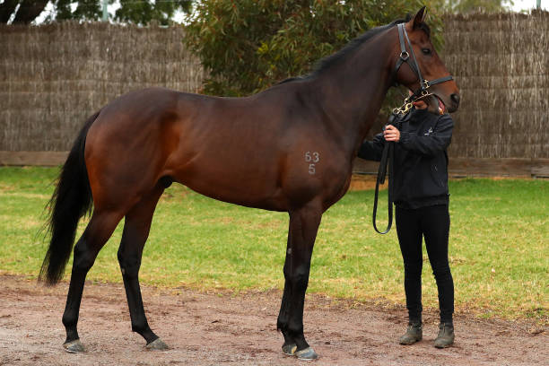 AUS: The Chosen One Flemington Stable Media Opportunity