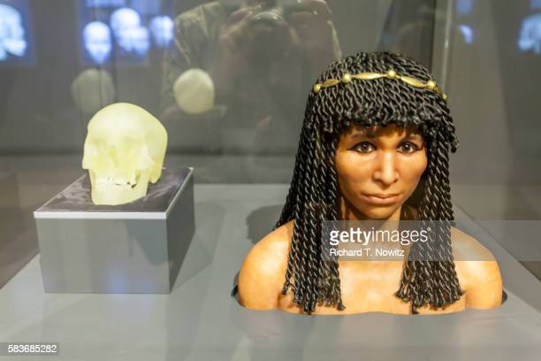 forensic reconstruction egyptian mummy - field museum of natural history stock pictures, royalty-free photos & images