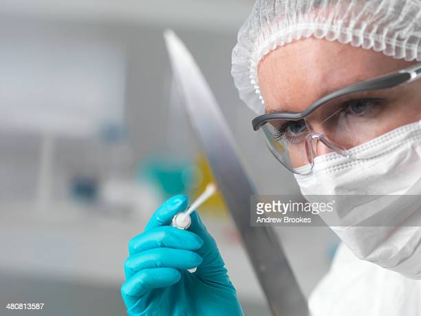 Forensic scientist in laboratory taking DNA evidence with a swab for crime investigation