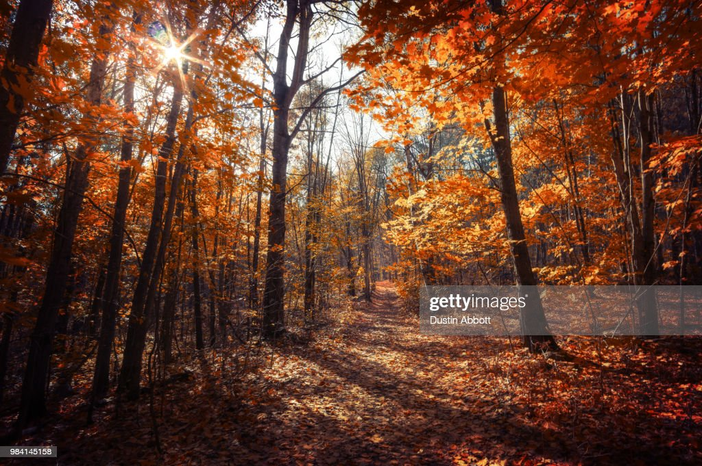 Forest Ablaze : Foto de stock